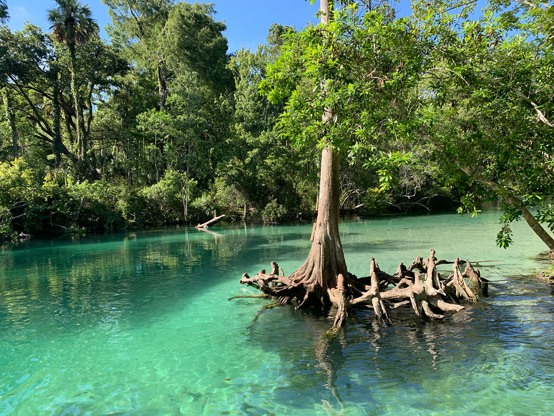 Mangrove and nature sights on Weeki Wachee